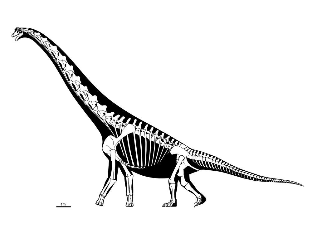 Скелет бронтозавра