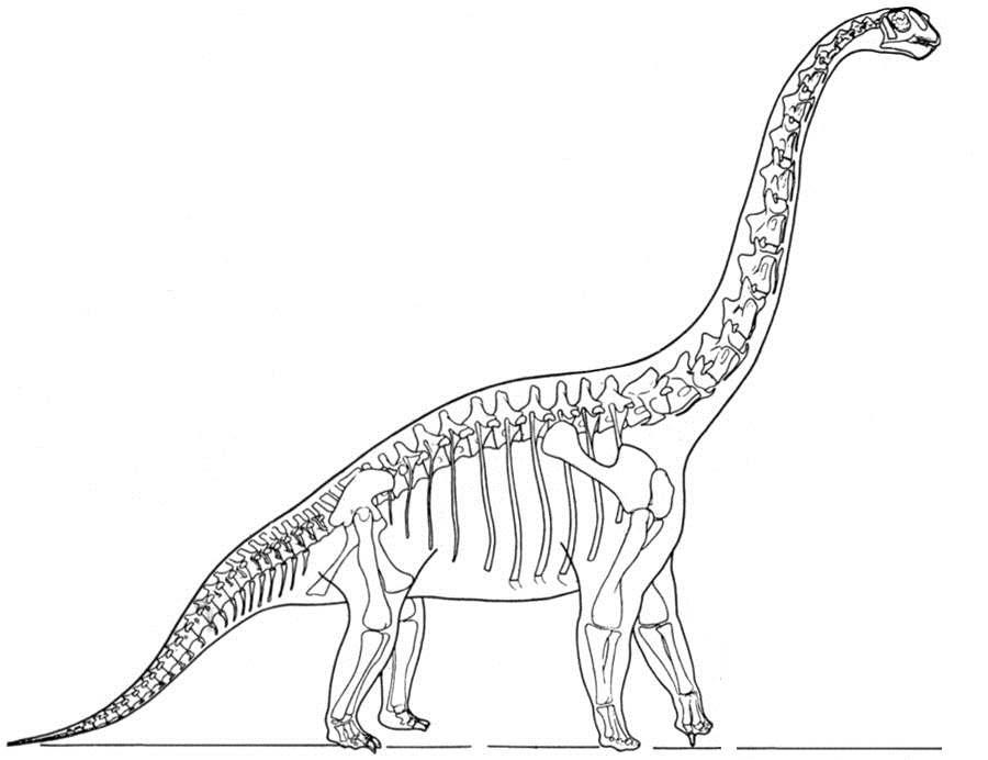 Скелет динозавра бронтозавра