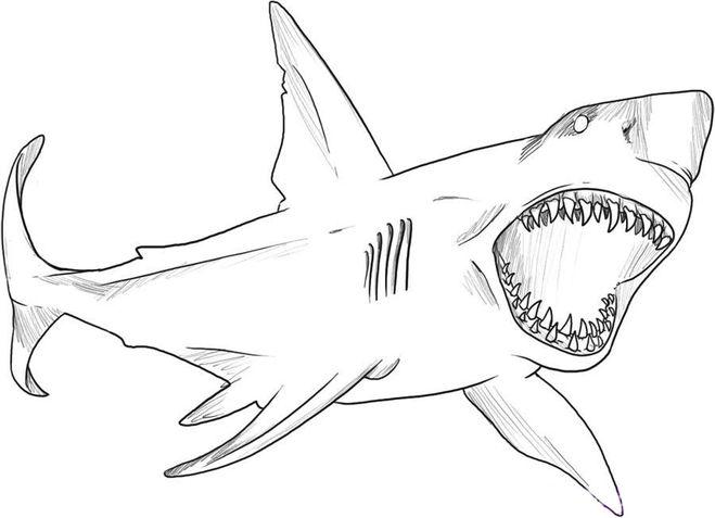Страшная акула с открытой пастью
