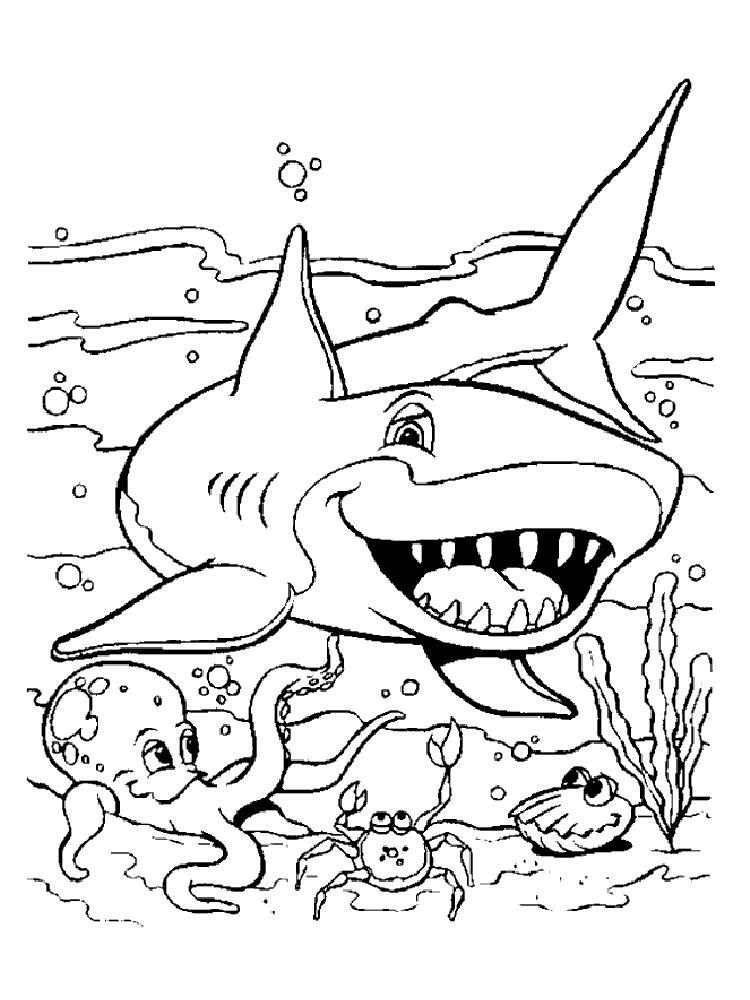 Акула, осьминог, рак и моллюск