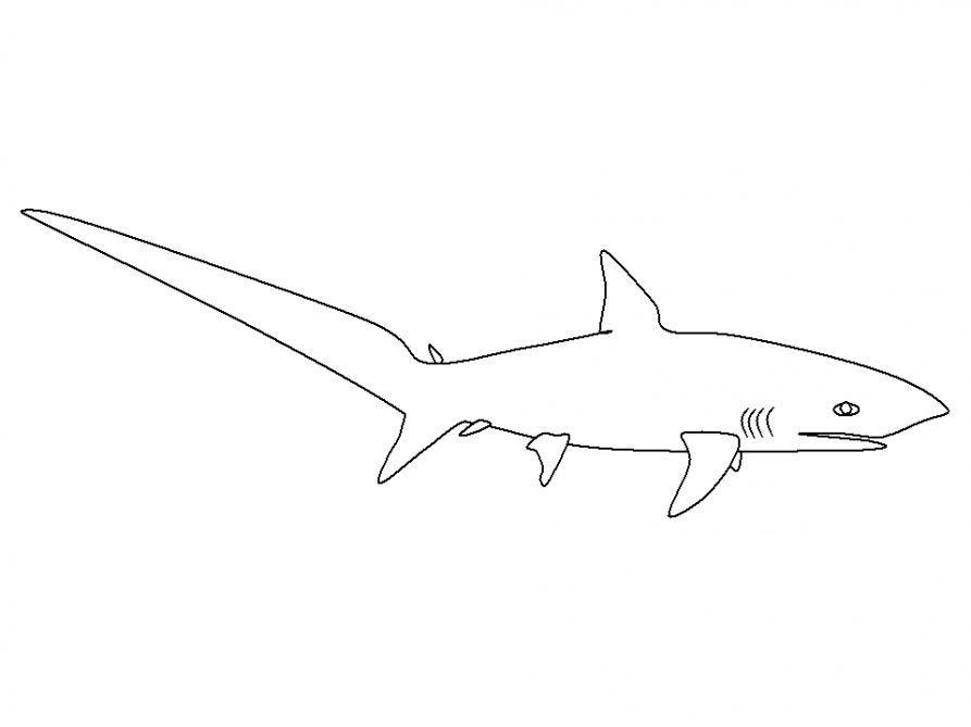 Рыба акула