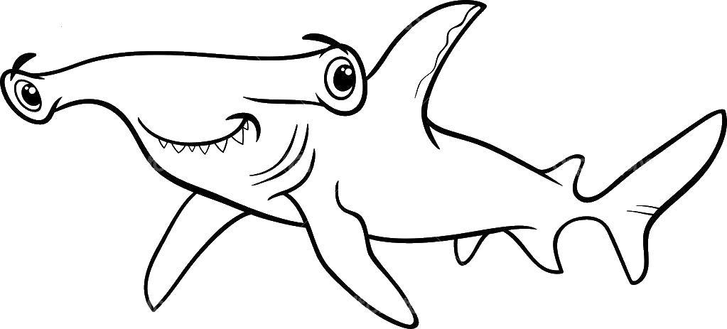 Акула молот