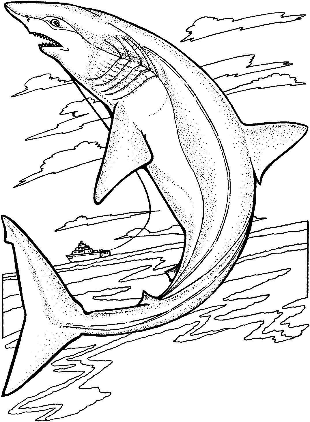 Красивая акула