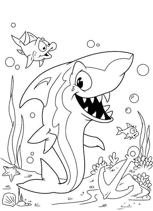 Весёлая акула с рыбками