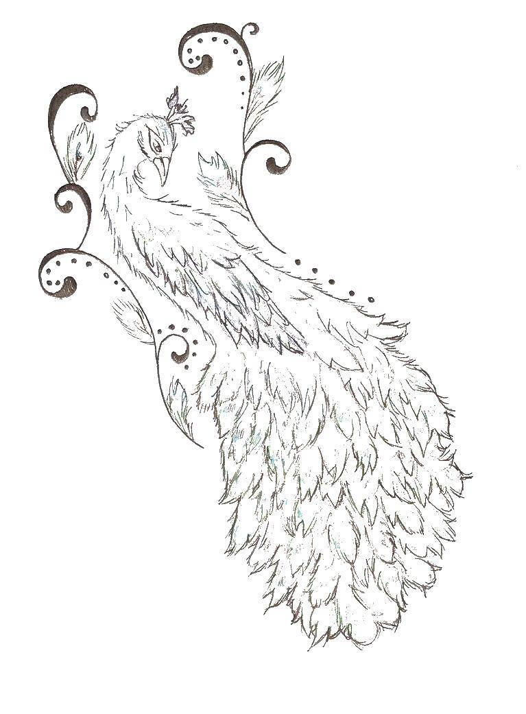 Раскраски домашние птицы павлин, птицы зоопарка павлины  Красивый хвост павлина