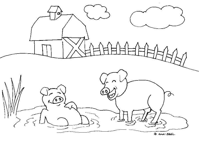 Свиньи лежат в луже