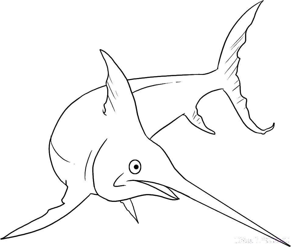 меч  Рыба меч