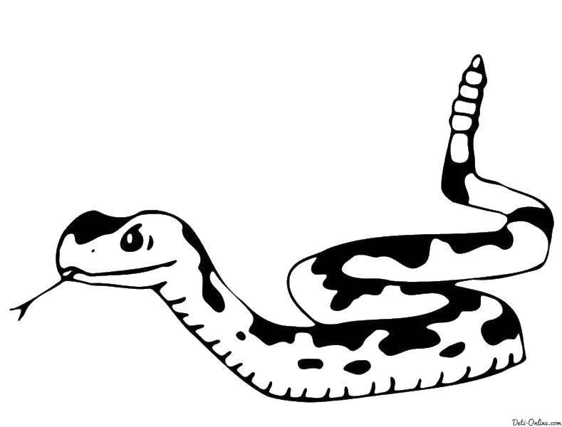 Пятна на змее
