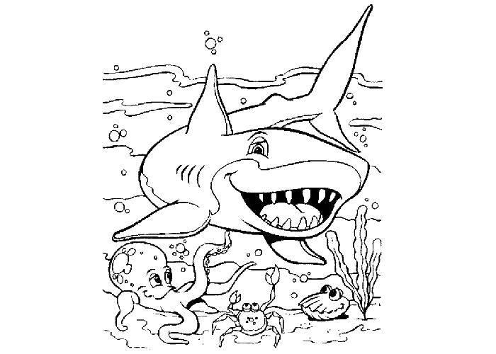 Акула и другие морские жители