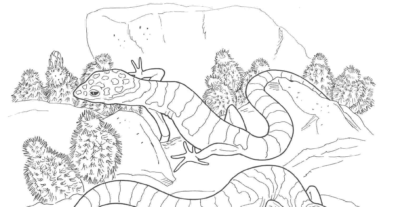 Раскраски ящерица  Ящеры