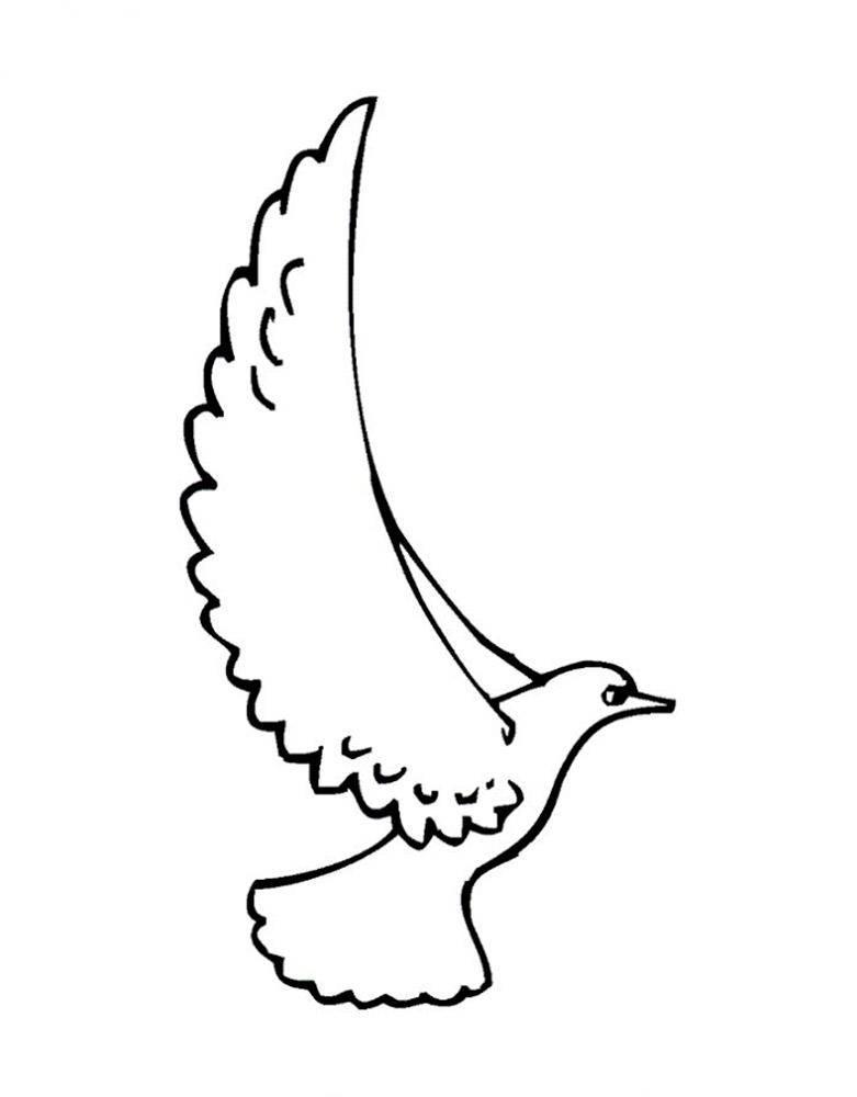 Раскраски с птицей голубь