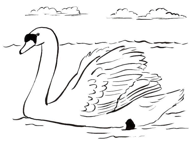 Плавучий лебедь