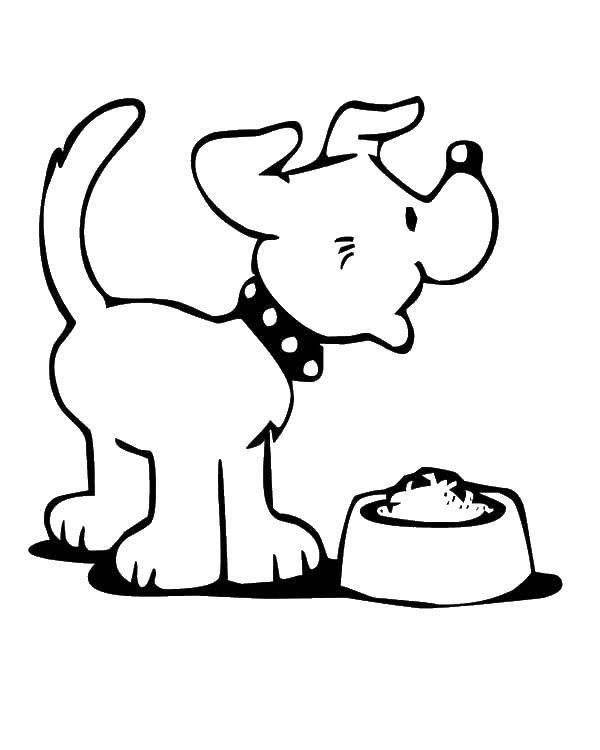 Пёс рад миске с кормом