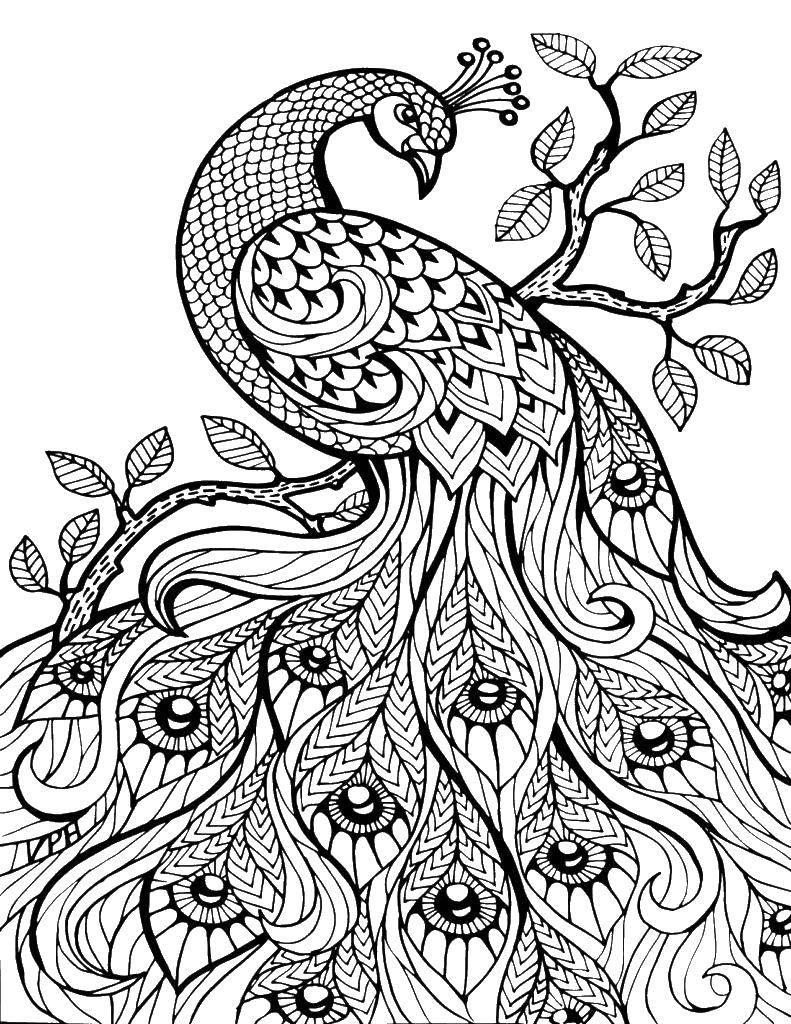 Раскраски домашние птицы павлин, птицы зоопарка павлины  Узорный павлин с красивым хвостом