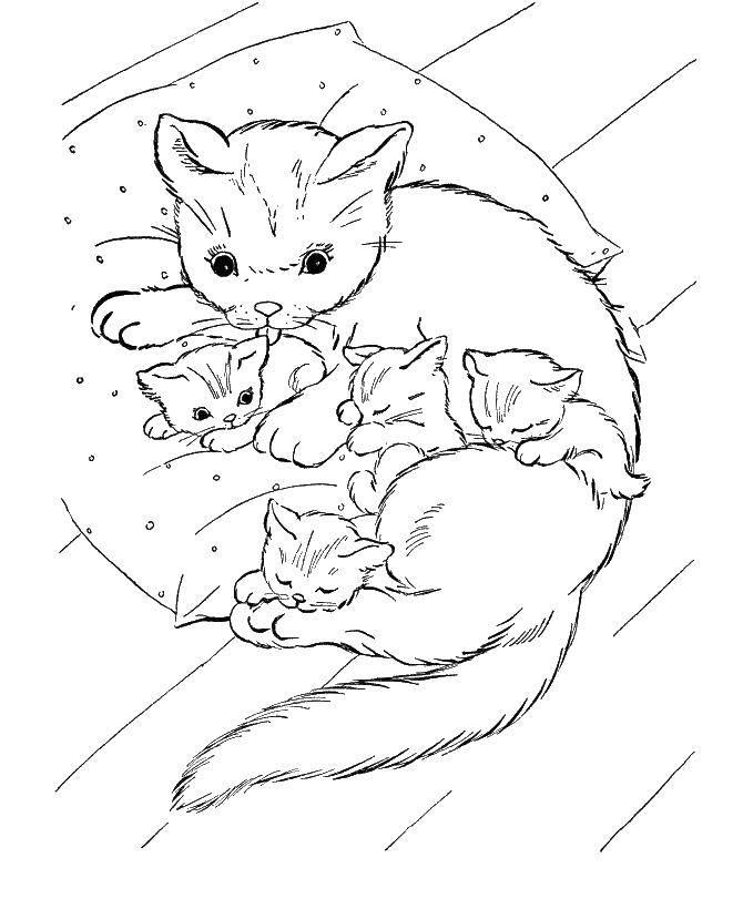 Кошка мама с спящими котятами