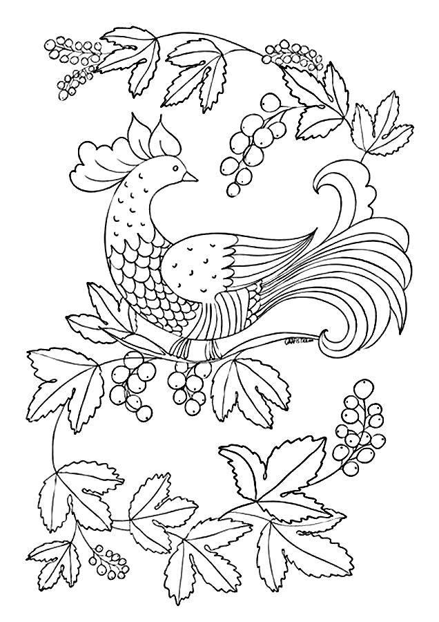 Раскраски домашние птицы павлин, птицы зоопарка павлины  Павлин смотрит на ягоды