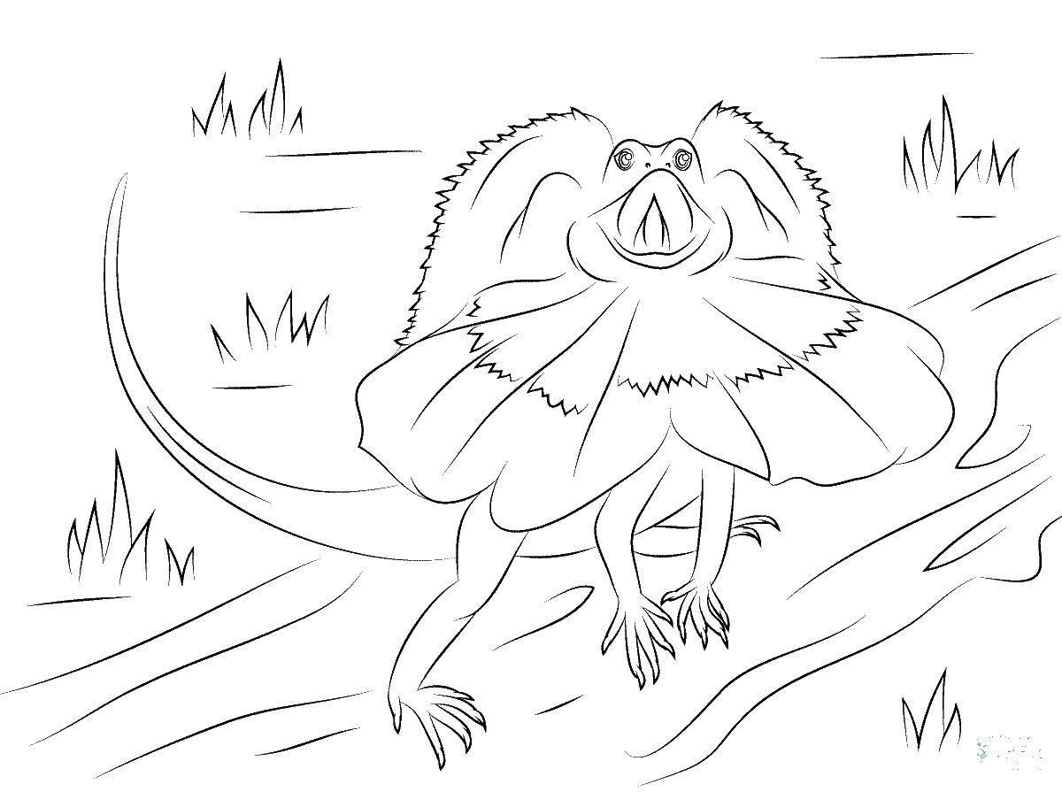 Раскраски ящерица  Плащеносная ящерица