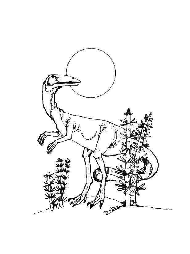 Целофизис относился к плотоядных динозавров цератозавров