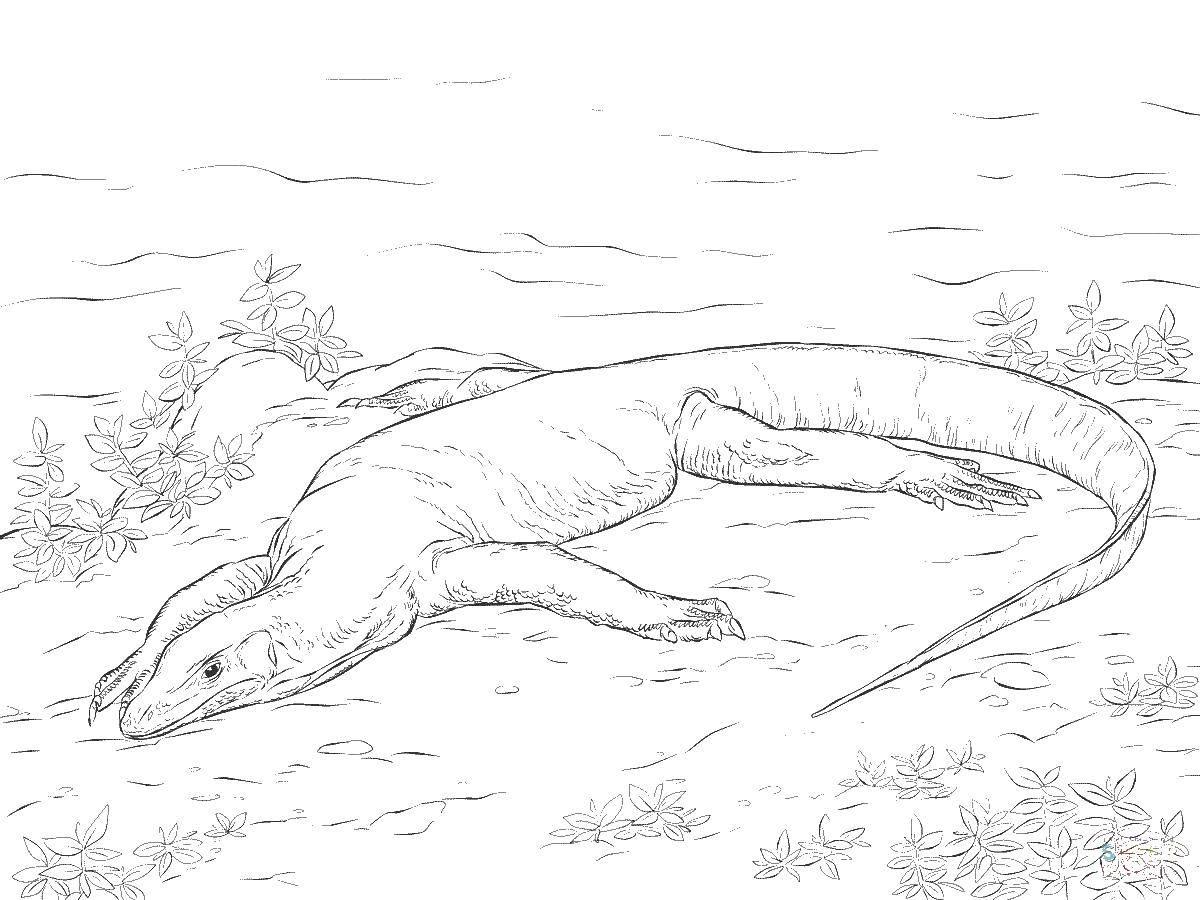 Раскраски ящерица  Вараны род ящериц семейства варановых.