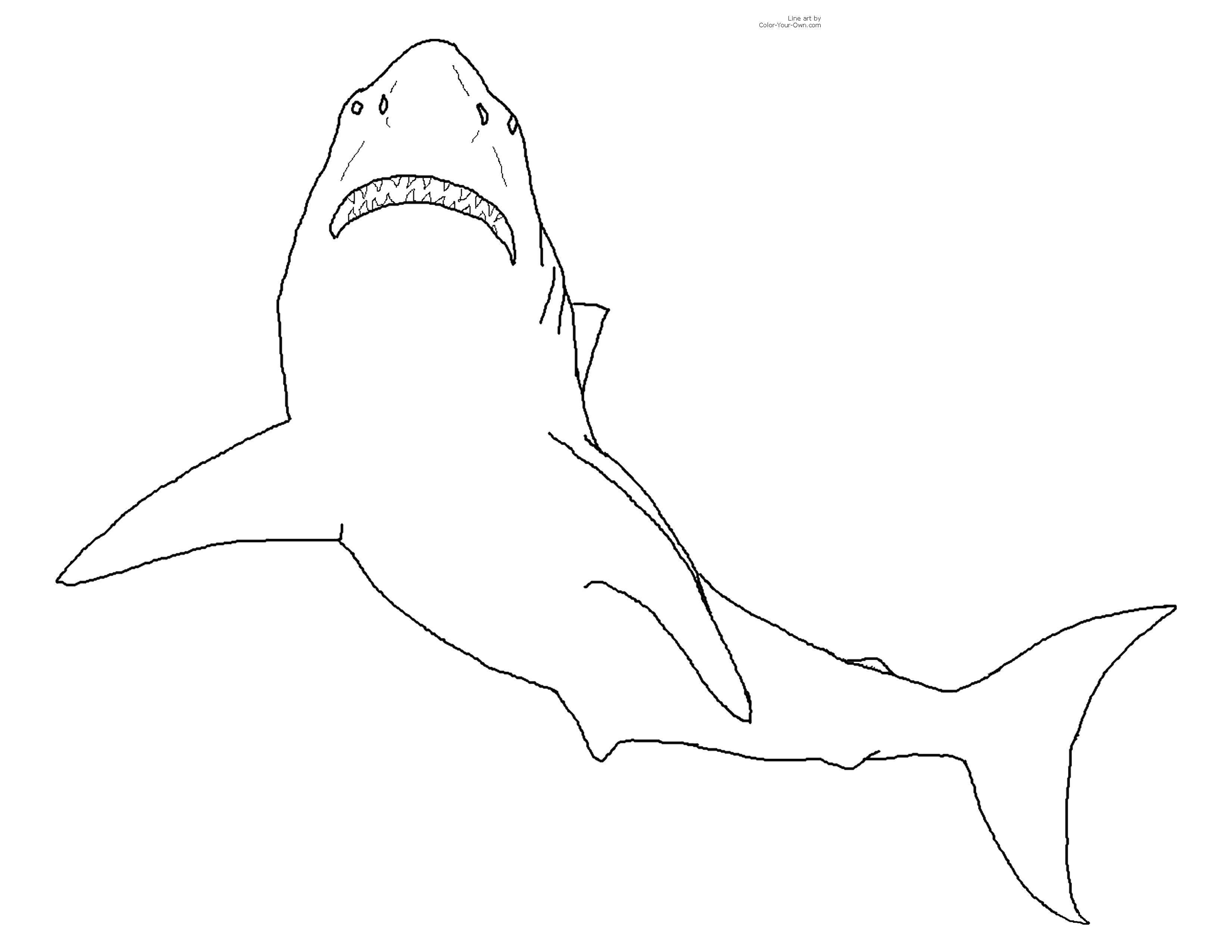 Плавающая акула