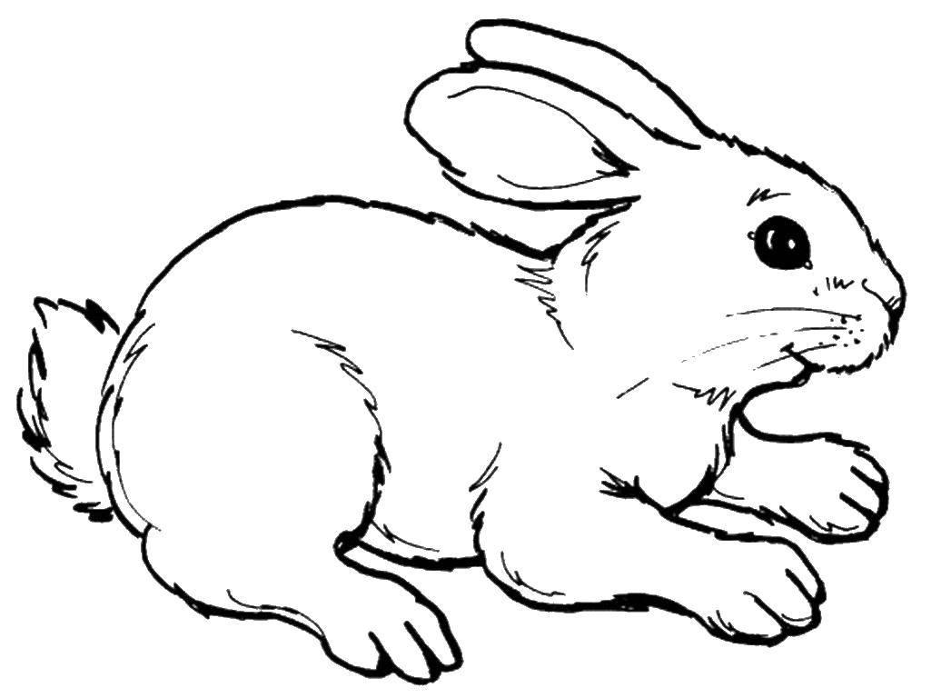 Раскраски зайцы, зайчиха, зайчонок  Заяц