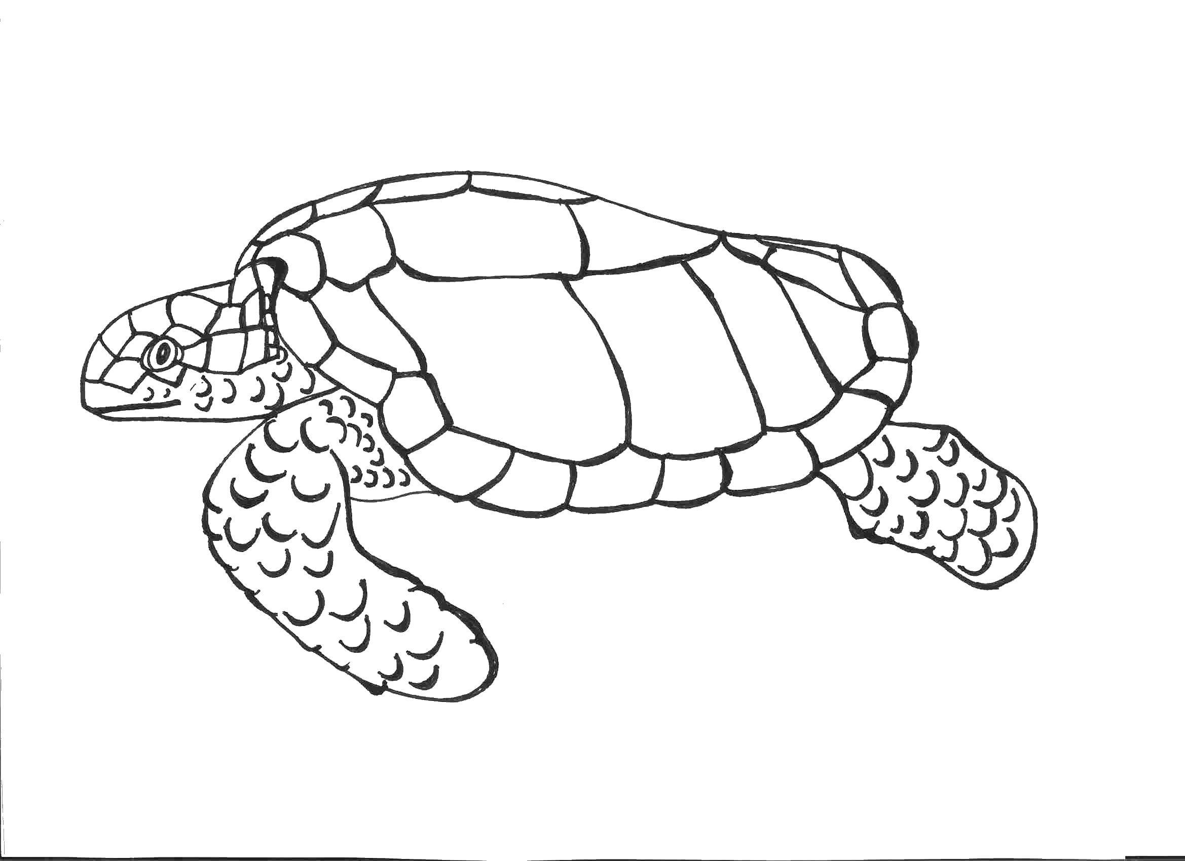 Раскраски морская черепаха раскраска