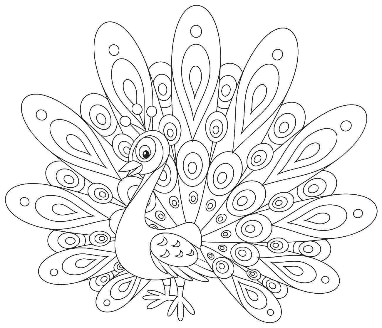Раскраски домашние птицы павлин, птицы зоопарка павлины  Павлин с шикарным хвостом