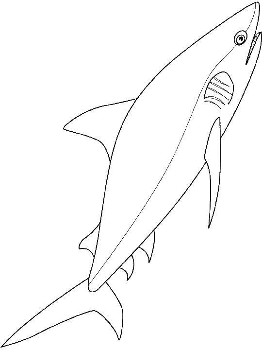 Кровожадная акула