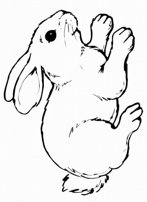 Раскраски зайчата и зайцы  Рисунок зайчика