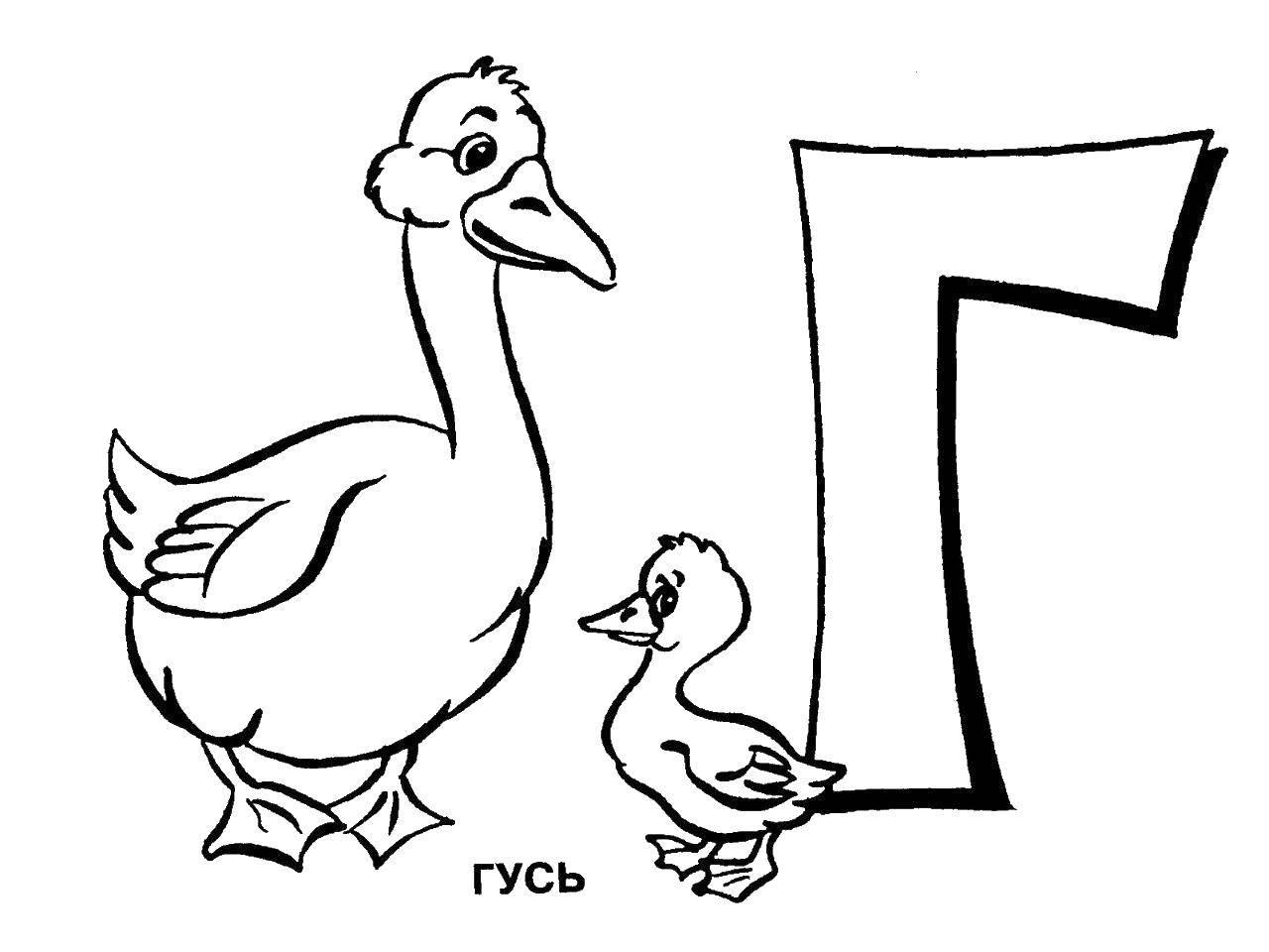 Раскраска с гусями  Гуси на букву г