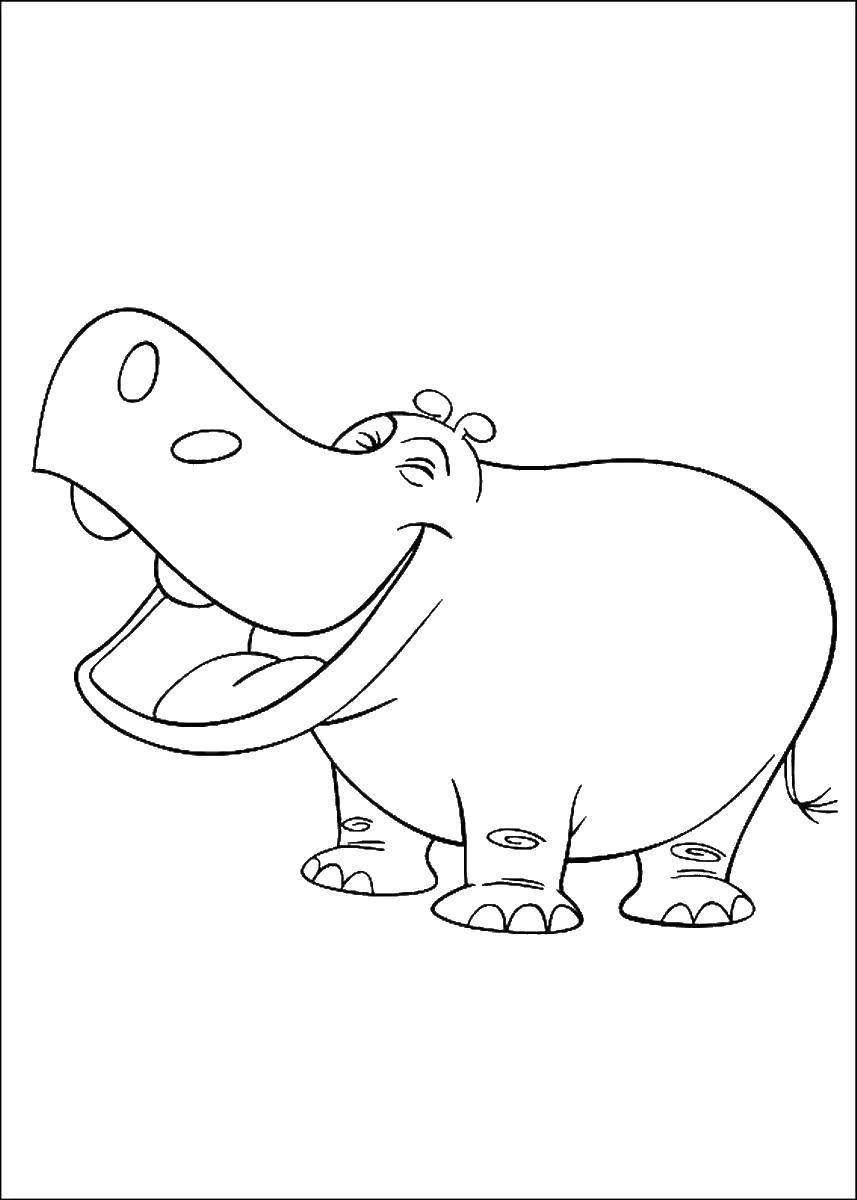 Раскраски бегемоты и гиппопотамы   Контур бегемота