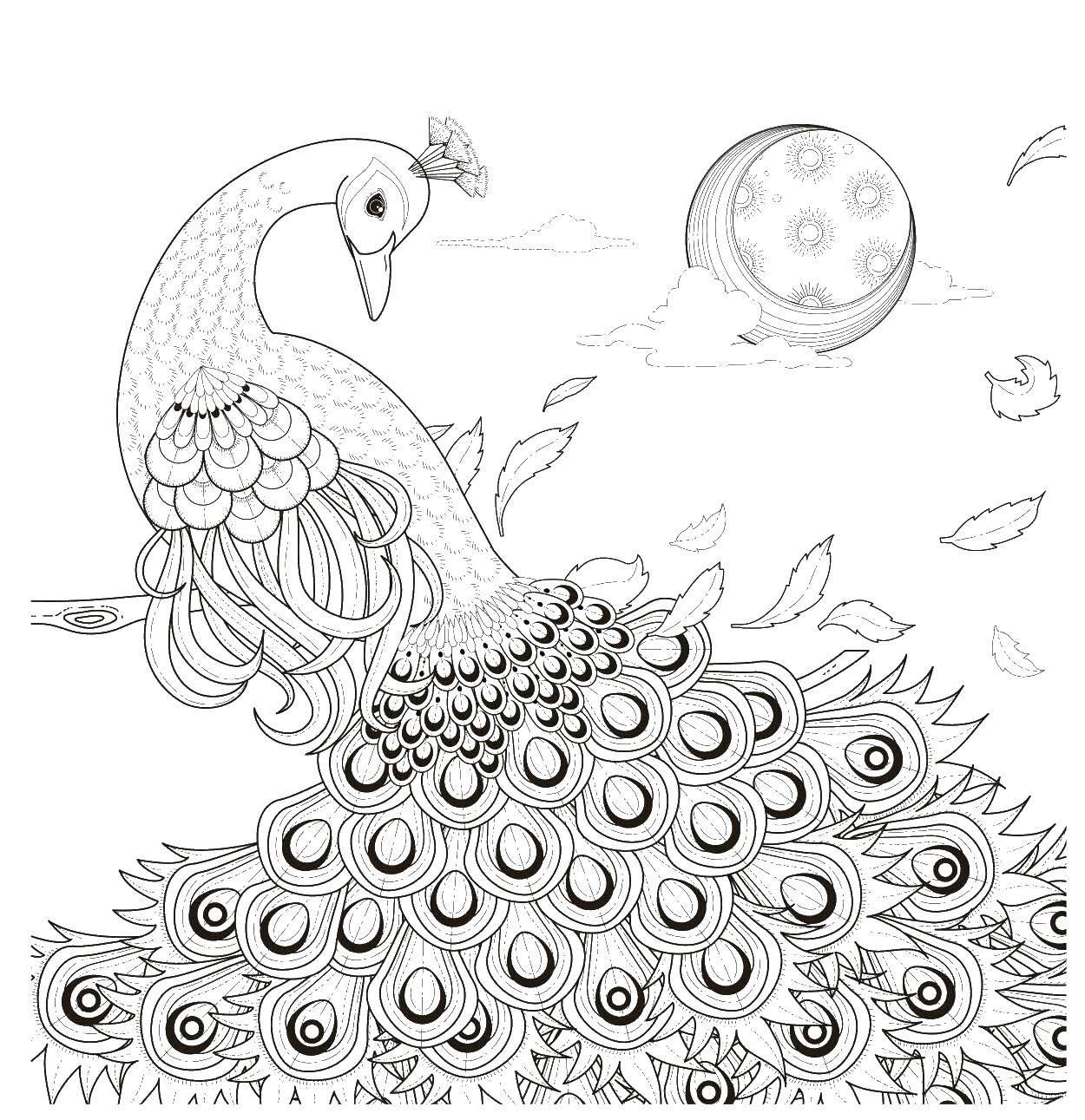 Раскраски домашние птицы павлин, птицы зоопарка павлины  Красивый павлин на фоне луны