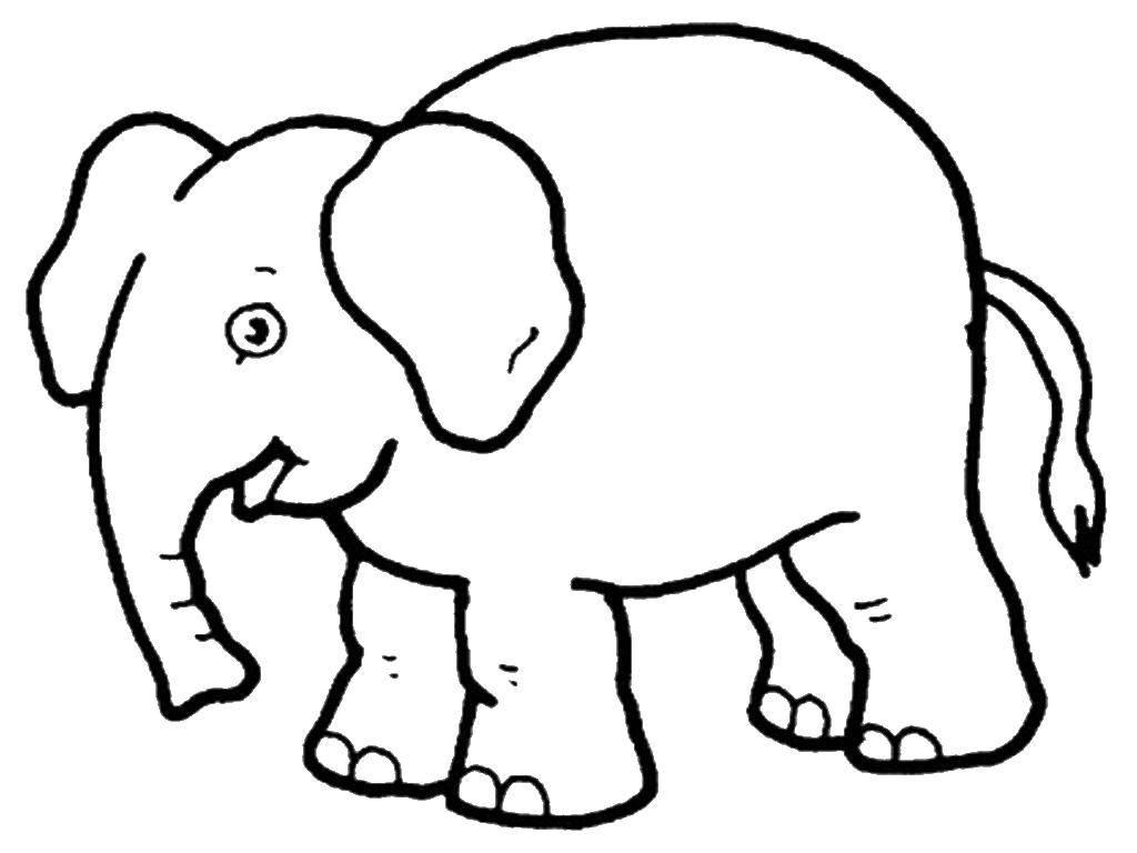 Радостный слонёнок