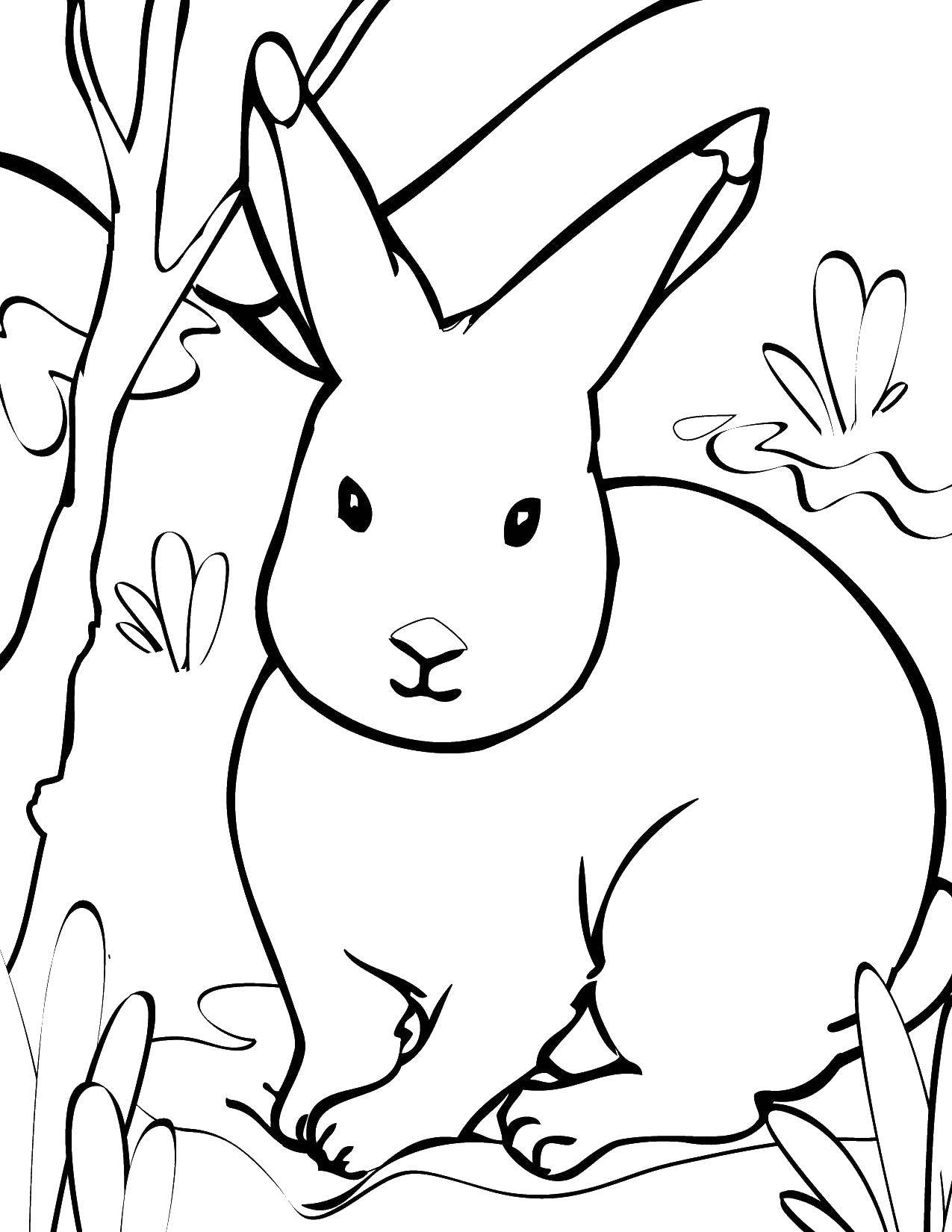 Раскраски зайчата и зайцы  Зайчик сидит в траве