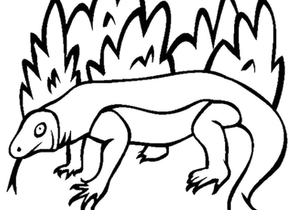 Раскраски ящерица  Ящерица
