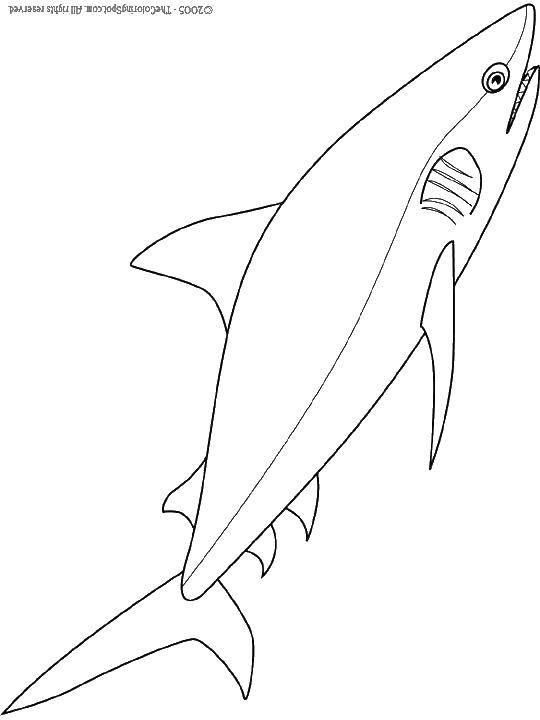 Акула и хвост