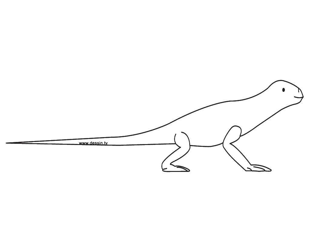 Раскраски ящерица  Длинный хвост ящерки