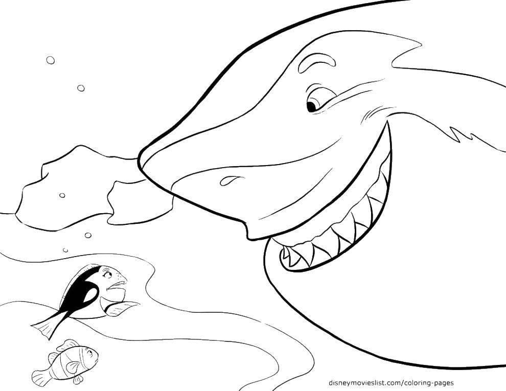 Рыбка и акула