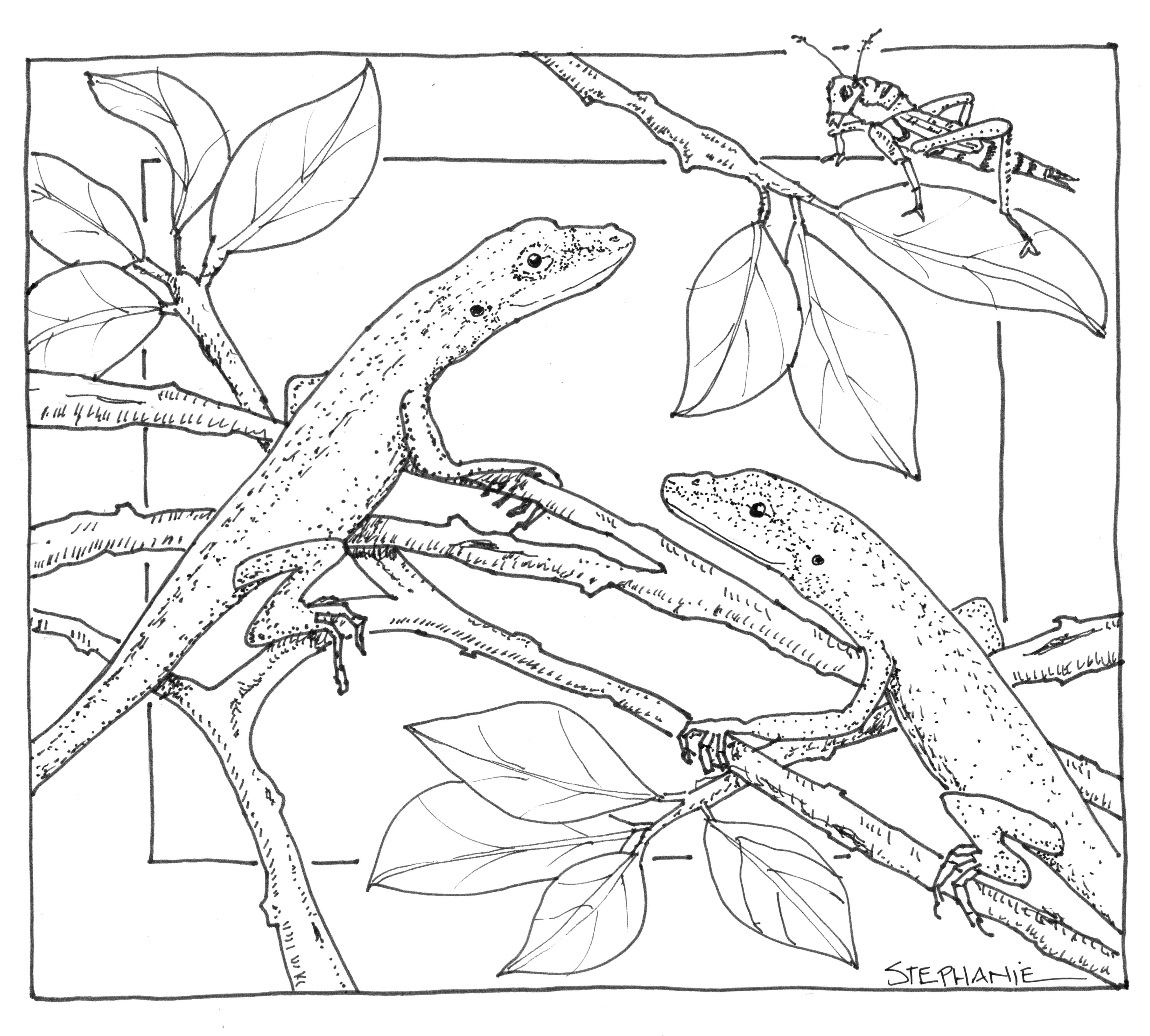 Раскраски ящерица  Ящерицы сидят на листьях