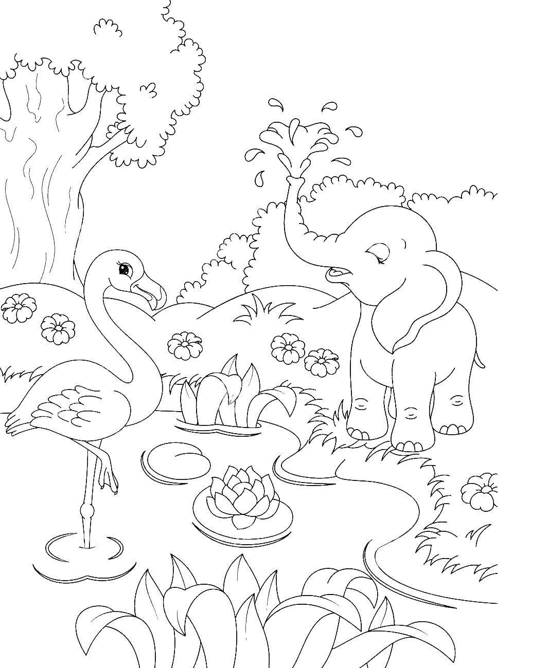Фламинго и слон на болоте с кувшинками