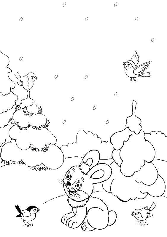 Раскраски зайчата и зайцы  Зайчик зимой в лесу