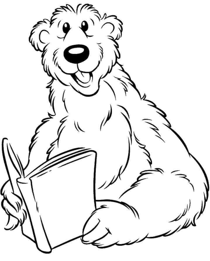 Раскраски медведь, медведица, медвежонок  Медведь читает книгу