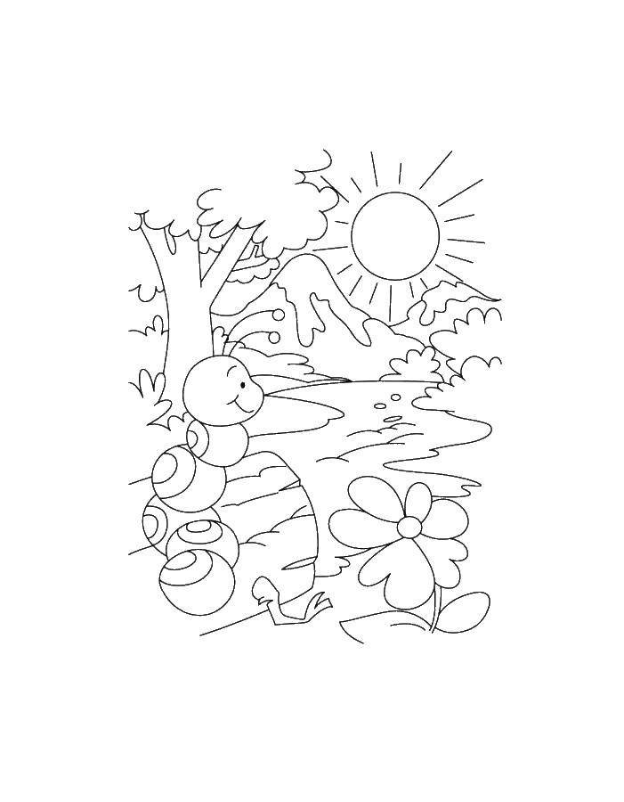 Раскраска с гусями  Гусеница в лесу