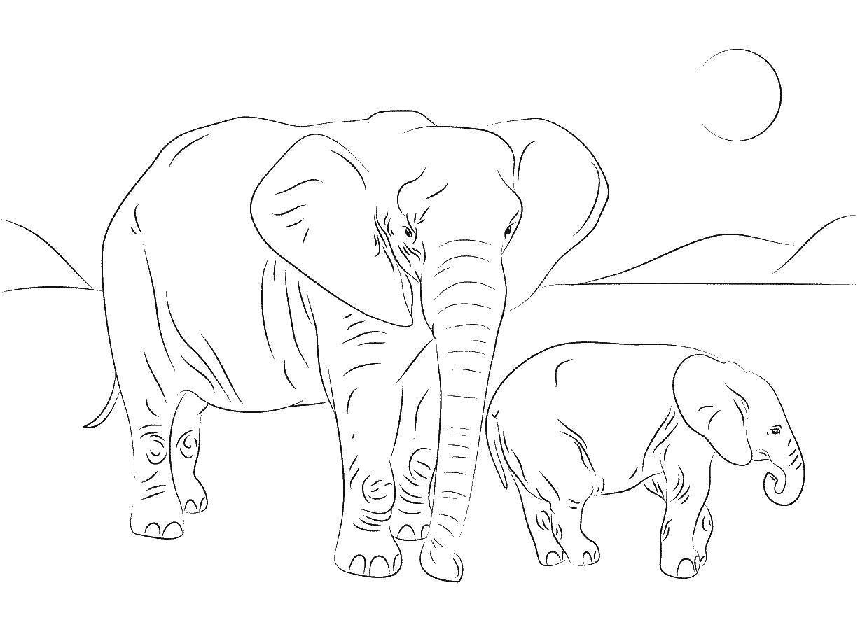 Мама слон и её слонёнок