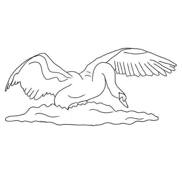 Лебедь взлетает