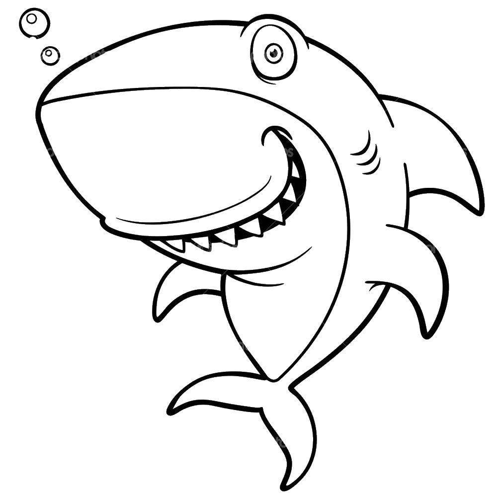 Добрая акула