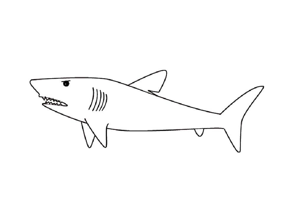 Злая акула