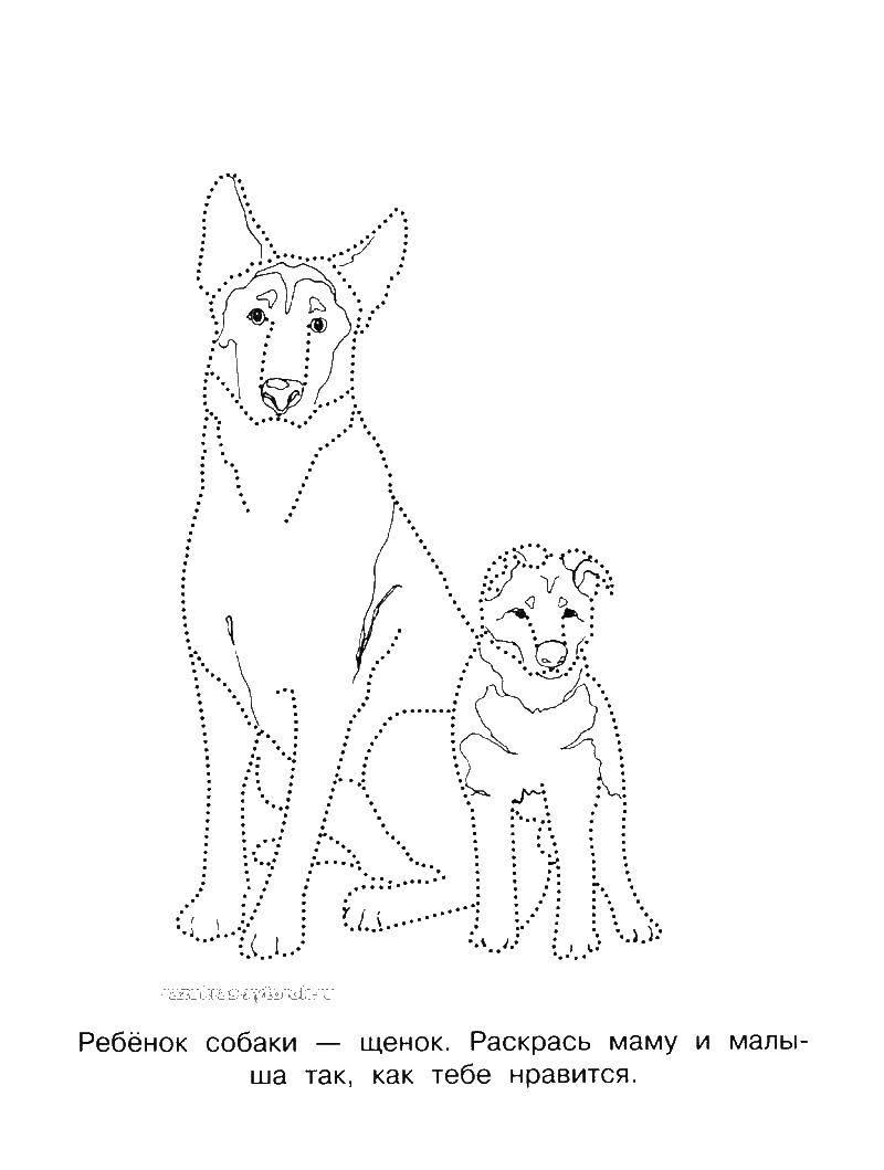 Раскраски собаки собаки