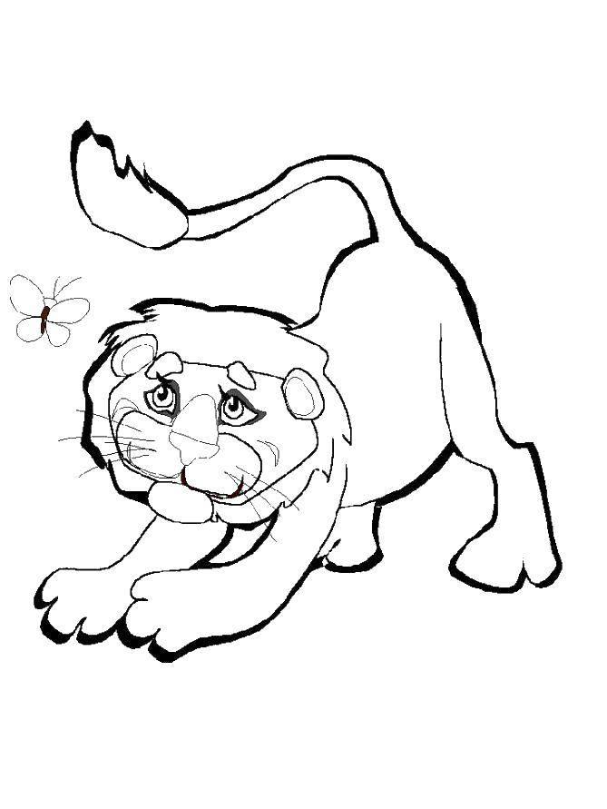 Раскраски лев, львы, львицы, львенок  Лев