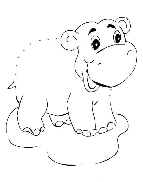 Раскраски бегемоты и гиппопотамы   Бегемот